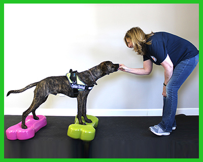 canine-fitness-and-conditioning