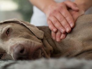 Certified Canine Sports Massage